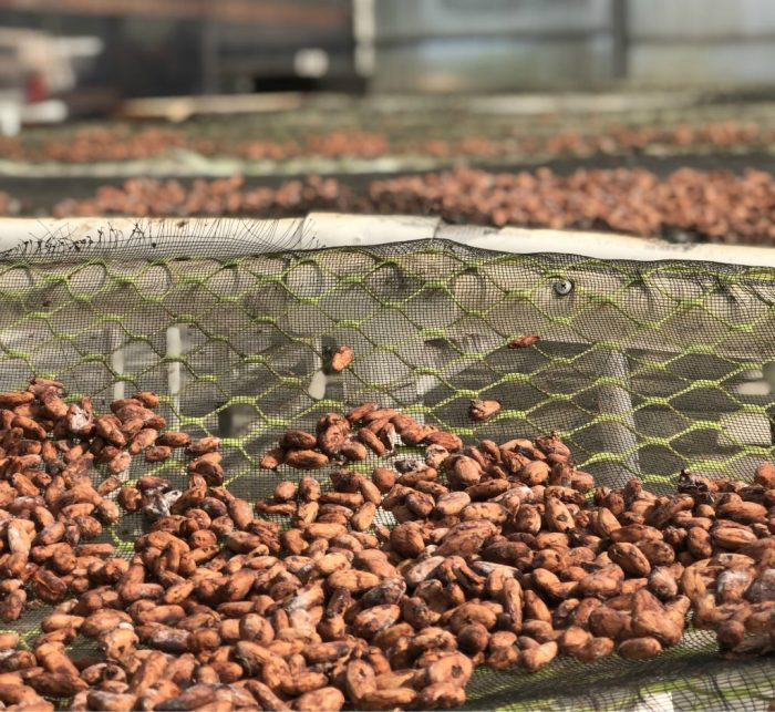 The-cacao-roasting-process-1024x941